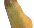 Круша Сорт Абат Фетел,pear Abate Fetel,Снимки Круши,Круша,Разсадник Круши,фиданки Круши,овошки Круши,сортове Круши,Разсадници Круши,