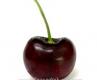 Череша сорт Бигаро Бюрла,Cherry Bigarreau Burlat Trees,Снимки Череши,Череша,Разсадник Череши,фиданки Череши,овошки Череши,сортове Череши,Разсадници Череши,